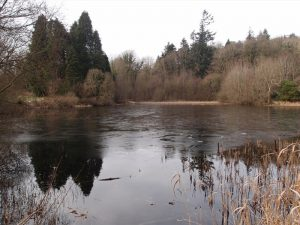 Castlewellan Forest Park – Cypress Pond Walk
