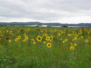 Ballyquintin Farm, National Nature Reserve Trail