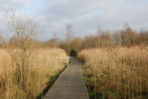 Peatlands Lakeland Walk