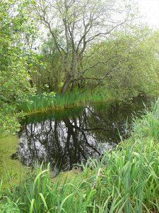 Brackagh Bog
