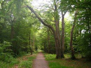 Clandeboye Way – Helen's Bay to Whitespots Country Park