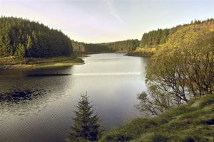 Banagher Forest