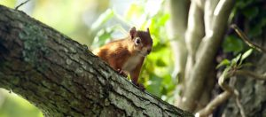 Mount Stewart – Red Squirrel Trail