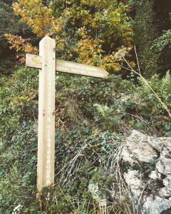 Cregagh Wood