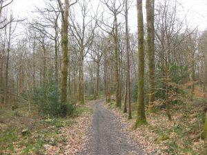 Derrynoyd River Trail