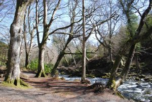 Tollymore Forest Park – River Trail