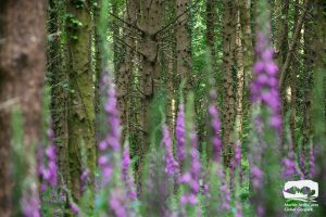 Castle Archdale Forest Woodland Riverside Walk