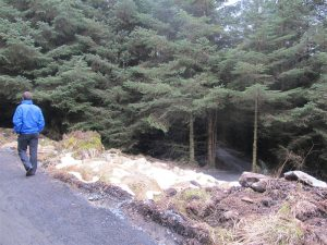 Davagh Forest