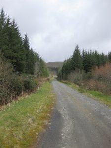 Moydamlaght Forest – Short Trail