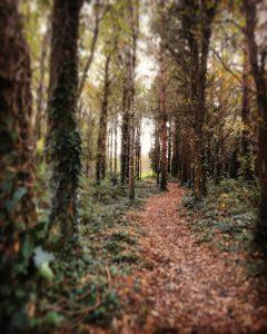 Castle Ward Farm Trail