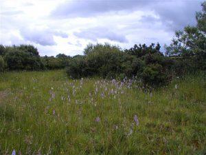 Peatlands Woodland Walk