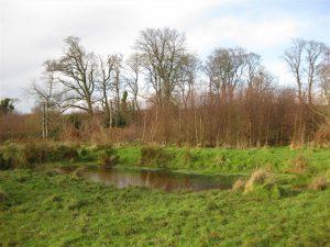 Oakfield Glen and Bashfordsland Wood