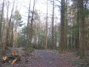 Glassdrummond Wood