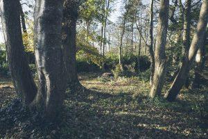 Montalto Estate Woodland Trail