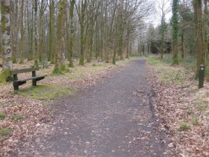 Derrynoyd Wood Trail