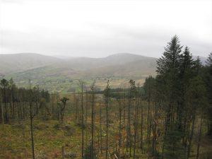 Moydamlaght Forest – Eagles Rock Trail