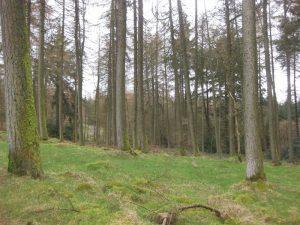 Moydamlaght Forest – Medium Trail
