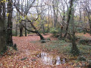 Prehen Wood