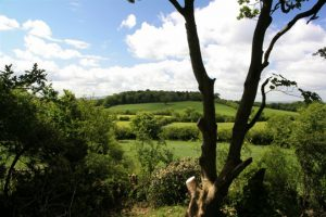 Loughbrickland Walk (Whyte's Estate)