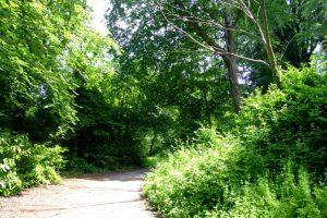 Delamont Strangford Walk