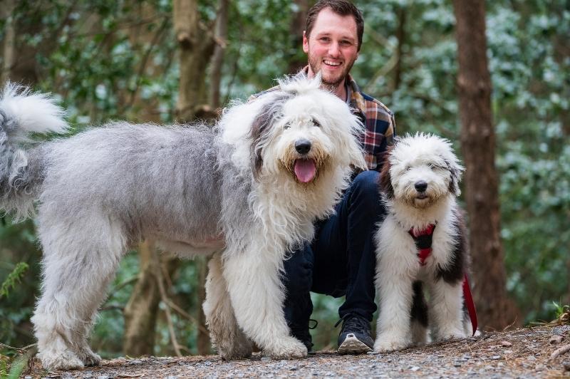 Best Dog Walks in Northern Ireland