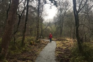 Carnagh Forest – Boundary Trail