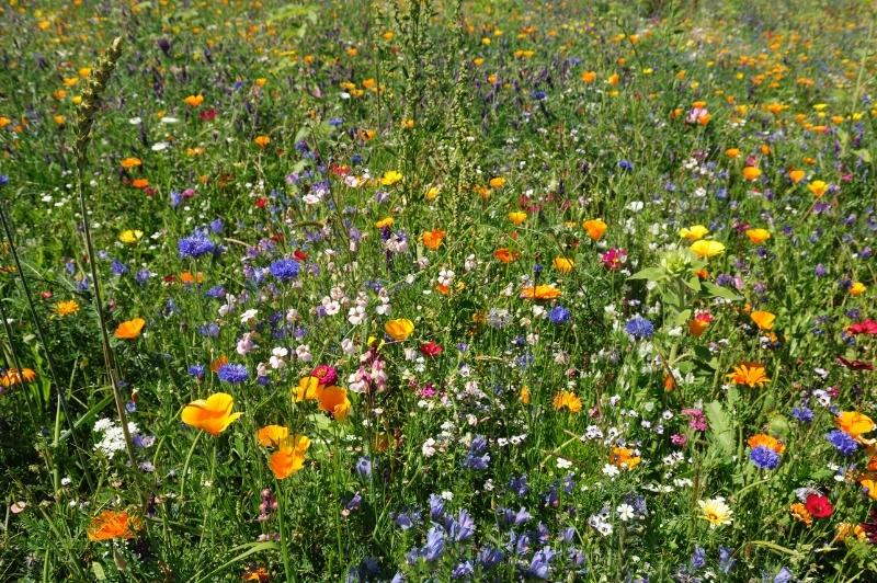City of Wildflowers