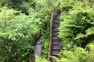 Genariff Forest Park