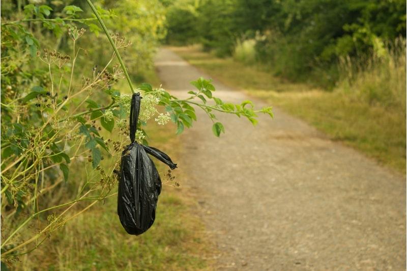 Dog Poo bag hanging on tree branch